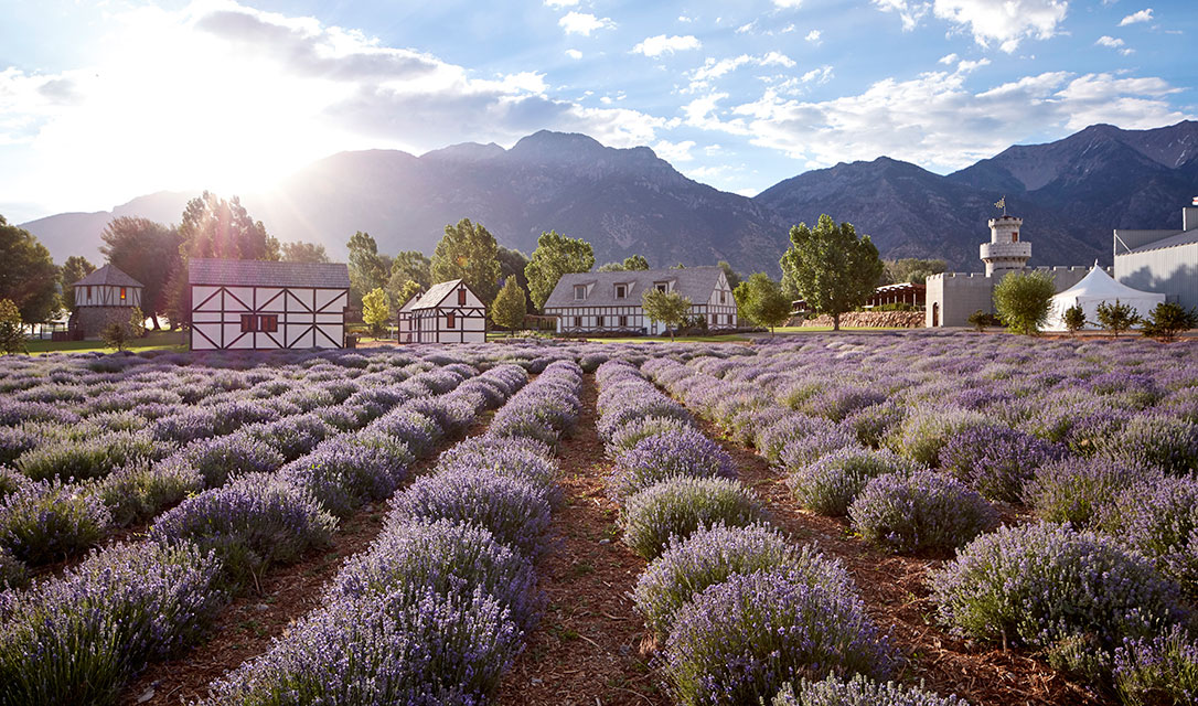 The Young Living Lavender Farm And Distillery Is An Iconic Lavender Farm,  Not Only To Young Living But Also To The Essential Oil Movement And The  Wellness ...